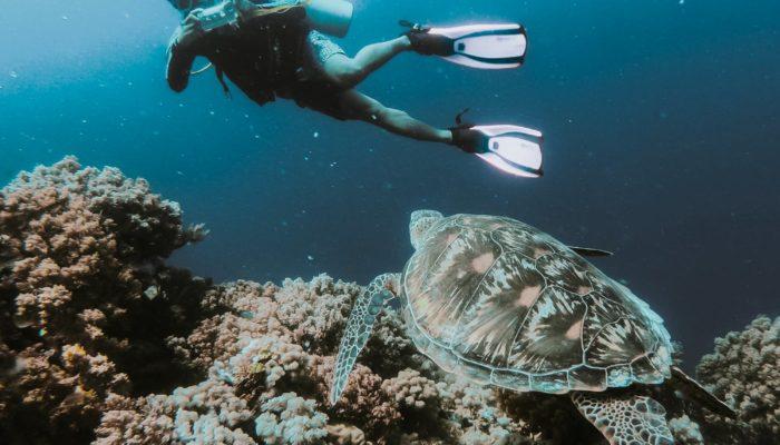snorkelling-svt